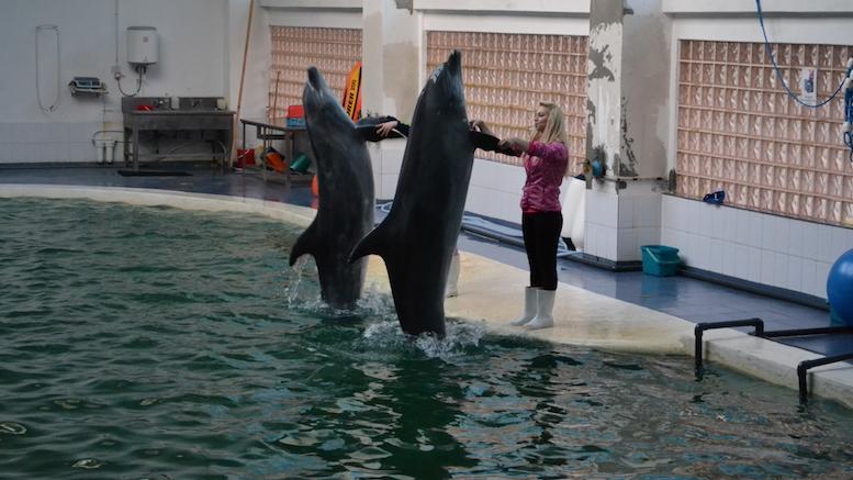 Silvia și Georgiana învață delfinii să danseze. FOTO Adrian Boioglu