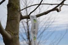 City Park își face reclamă pe copacii plantați. FOTO Adrian Boioglu