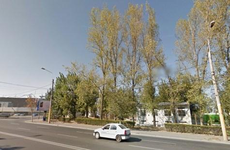Arborii sănătoși care vor fi tăiați de Primăria Constanța. FOTO Google Maps