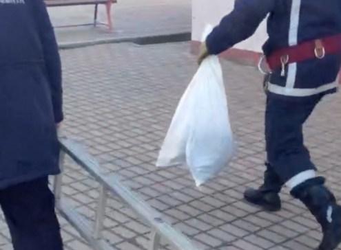 Vidra salvata de ISU Dobrogea