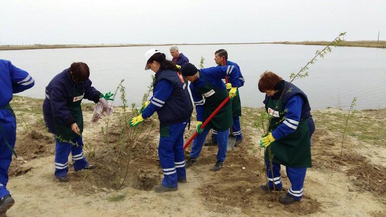 Voluntarii Rompetrol au plantat copaci la Corbu