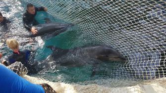Mutarea delfinilor în noul Delfinariu