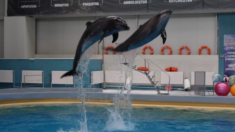 Delfinii din noul Delfinariu din Constanța. FOTO Adrian Boioglu