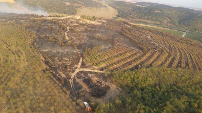Incendiu de vegetație și pădure la Crucea