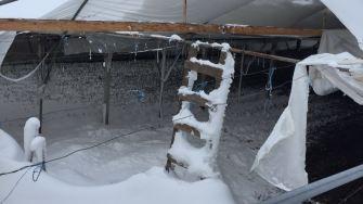 Solarii distruse de viscol la Topraisar și Kogălniceanu
