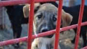 Pui de câine maidanez la Biobaza Constanța. FOTO Adrian Boioglu