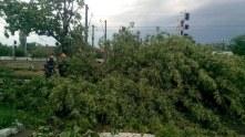 cod galben copaci cazuti isu ialomita (6)_900x675
