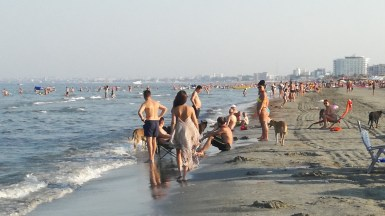 Câinii maidanezi au luat cu asalt plaja