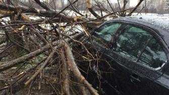 Un copac s-a rupt și a căzut peste o mașină parcată. FOTO Facebook