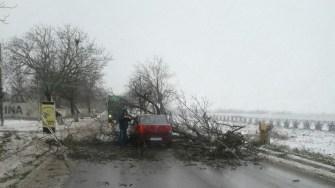 Un șofer a pierdut controlul volanului din cauza viscolului și a lovit un copac, acesta căzând pe șosea.