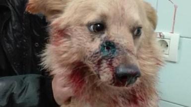 Câinele împușcat în maxilar a fost transportat la o clinică veterinară. FOTO Facebook