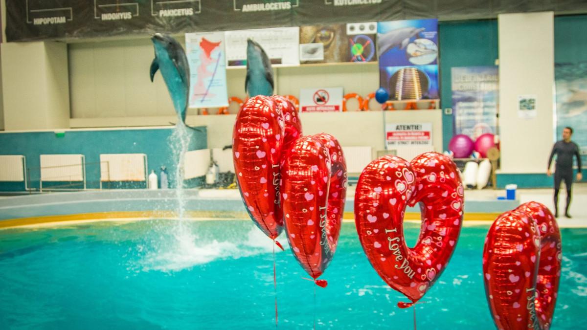 valentines day la delfinariu (12)