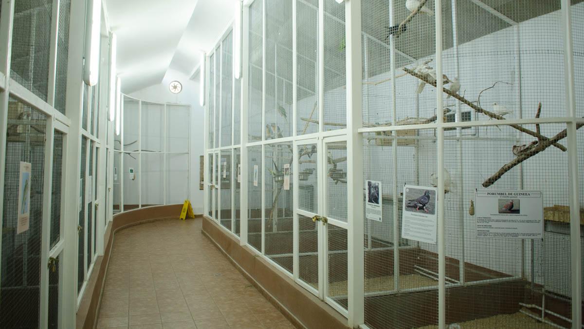 CMSN Microrezervatie animale (39)