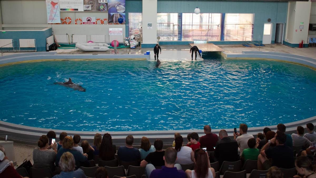 Delfini Delfinariu (11)