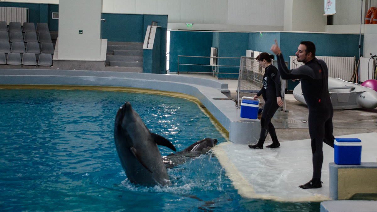 Delfini Delfinariu (13)
