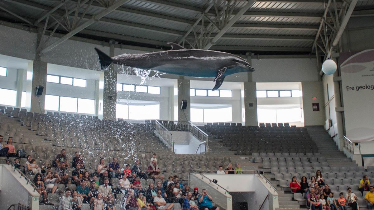 Delfini Delfinariu (15)