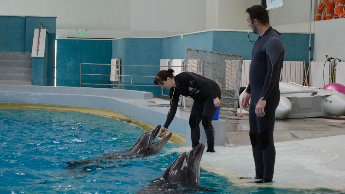 Delfini Delfinariu (21)