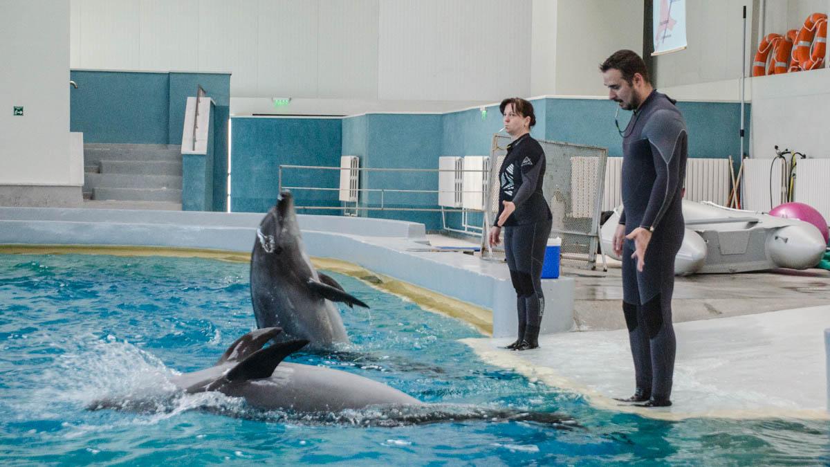 Delfini Delfinariu (22)