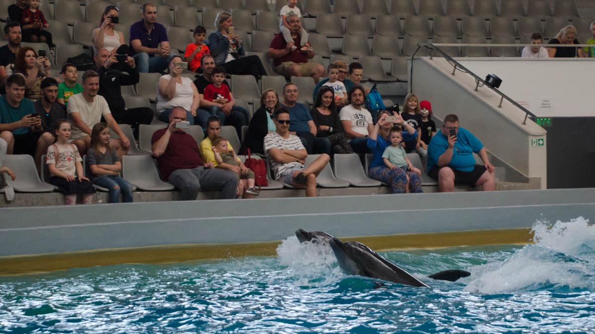 Delfini Delfinariu (23)