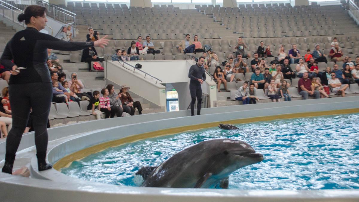 Delfini Delfinariu (34)