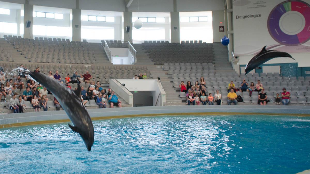 Delfini Delfinariu (37)