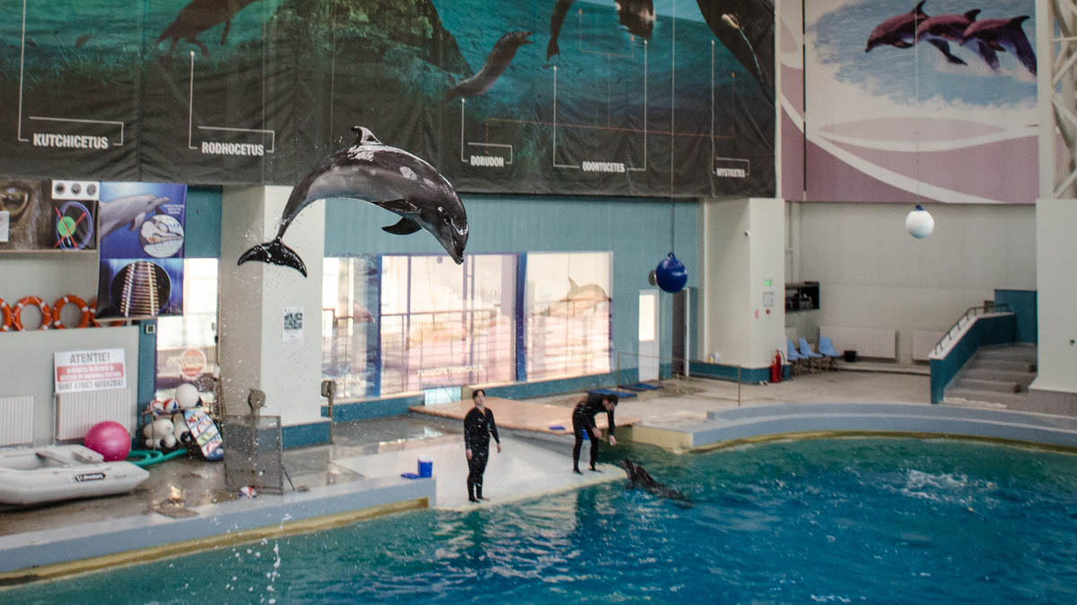 Delfini Delfinariu (4)