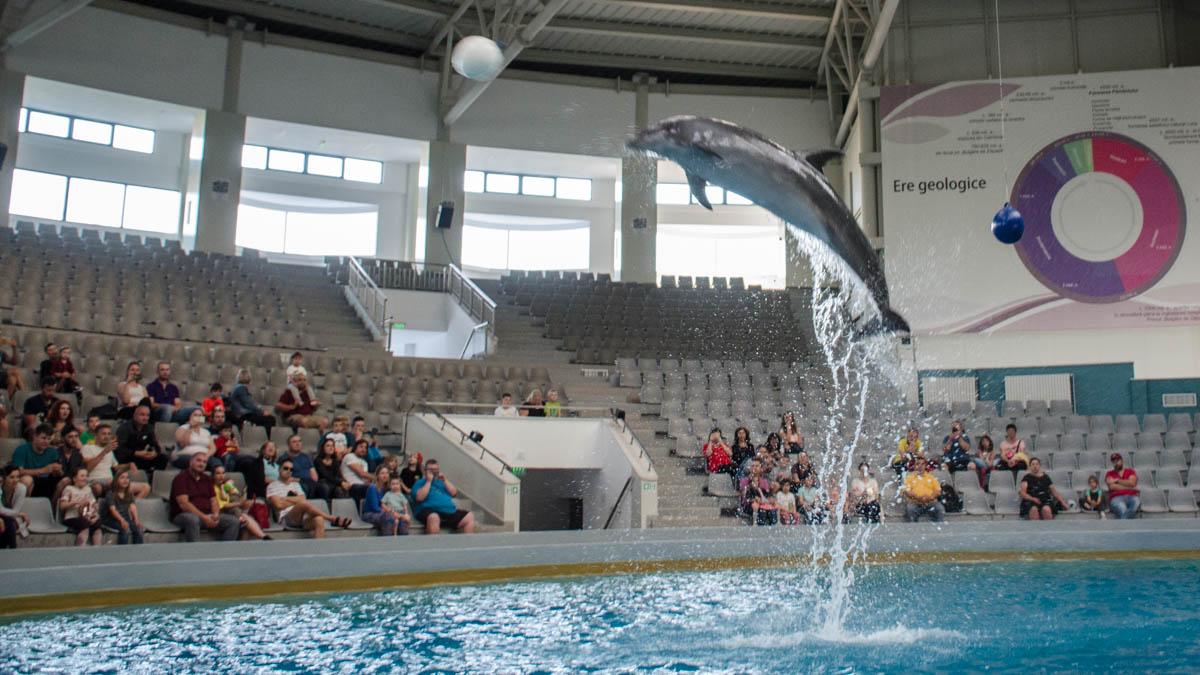 Spetacolul Delfinilor de la Constanța. FOTO Cătălin Schipor