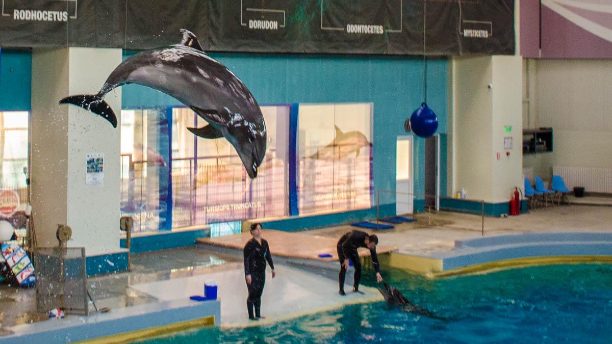 Delfini Delfinariu (5)
