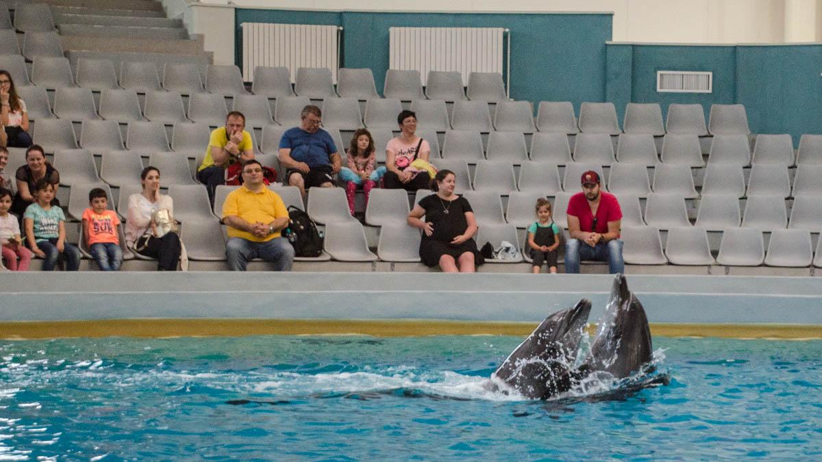 Delfini Delfinariu (56)