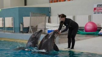 Delfini Delfinariu (57)