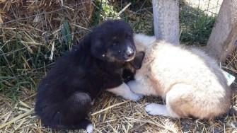 Pompierii au salvat doi pui de câine din incendiu. FOTO ISU Dobrogea