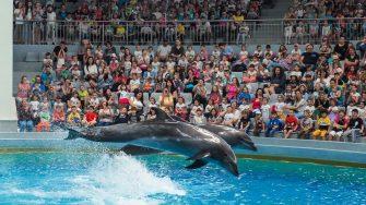 Delfinii sunt gata de spectacol. FOTO Cătălin SCHIPOR