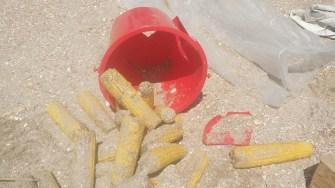 Marfa ilegală a fost confiscată sau distrusă pe loc. FOTO DGPL Constanța