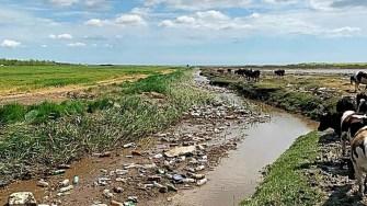 O cantitate mare de PEt-uri și gunoaie au fost adunate de ape. FOTO BOgdan Bola