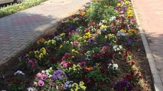 Spațiile verzi din Hârșova au fost înfrumusețate cu flori. FOTO Facbook/ Viorel Ionescu