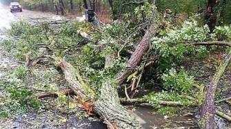 Copac a căzut peste un autoturism aflat în mers, pe DN 3. FOTO Facebook Mihai Călin