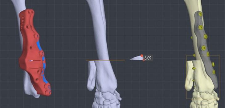 protesi-veterinarie-personalizzate-3d-cane-gatto