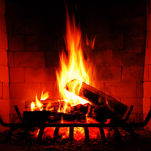 How to Choose the Best Firewood for Your Needs  Firewood Facts