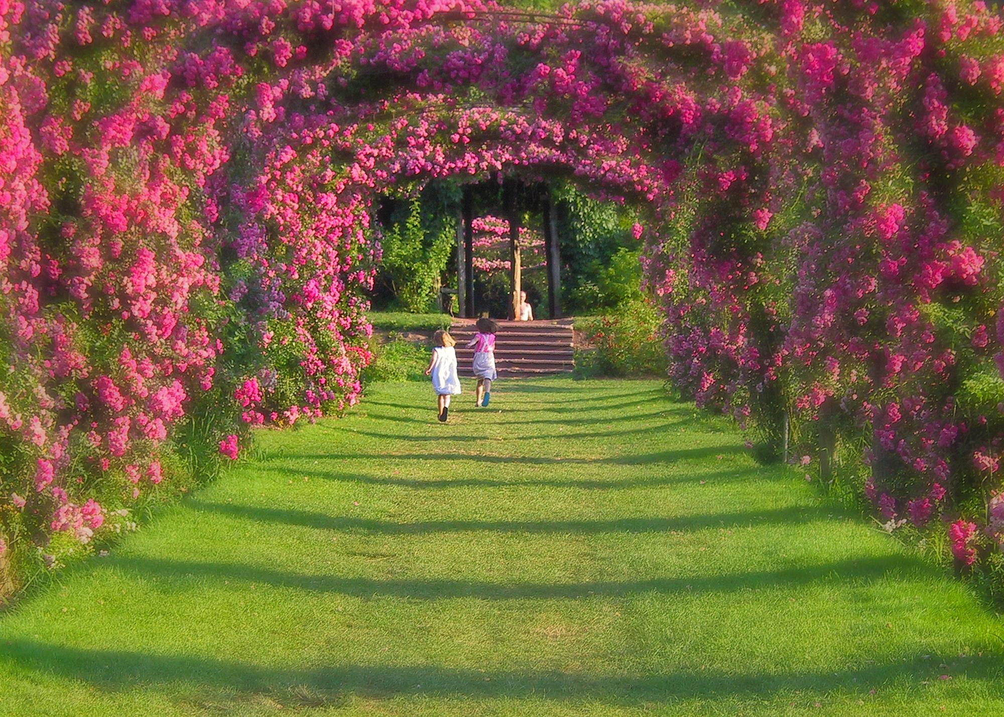 American Wallpaper Fall River Elizabeth Park Rose Gardens Visit Ct