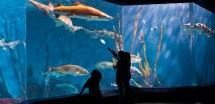 Maritime Aquarium Norwalk Visit Ct