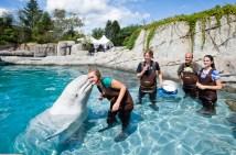 Mystic Aquarium Certificates - Ftempo