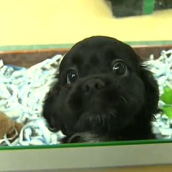 Kitchen Stores Online Metal Table Edmonton Humane Society Issues Warning Over New Pet ...