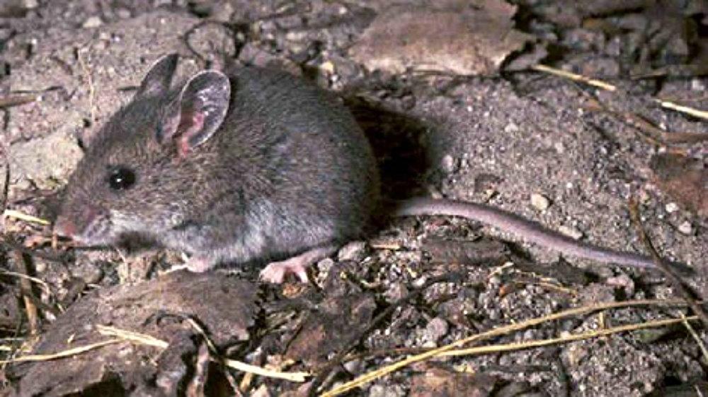Sask. confirms hantavirus releated death   CTV News