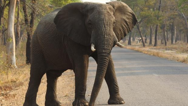 An elephant in Hwange National Park, Zimbabwe