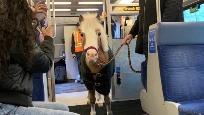Chuck's Mini Horse Winifred