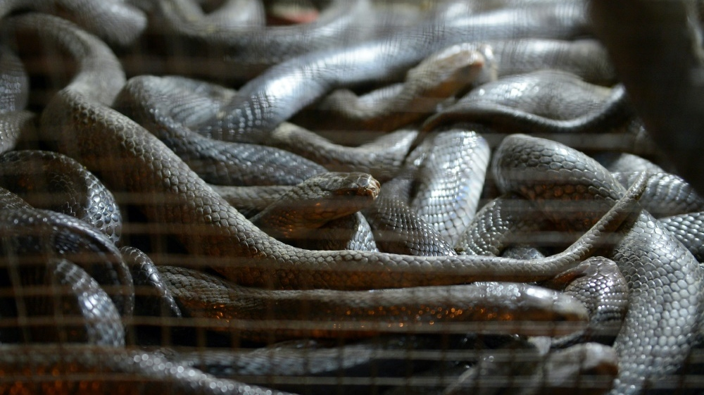 Studies suggest role of bats, snakes in coronavirus outbreak | CTV ...