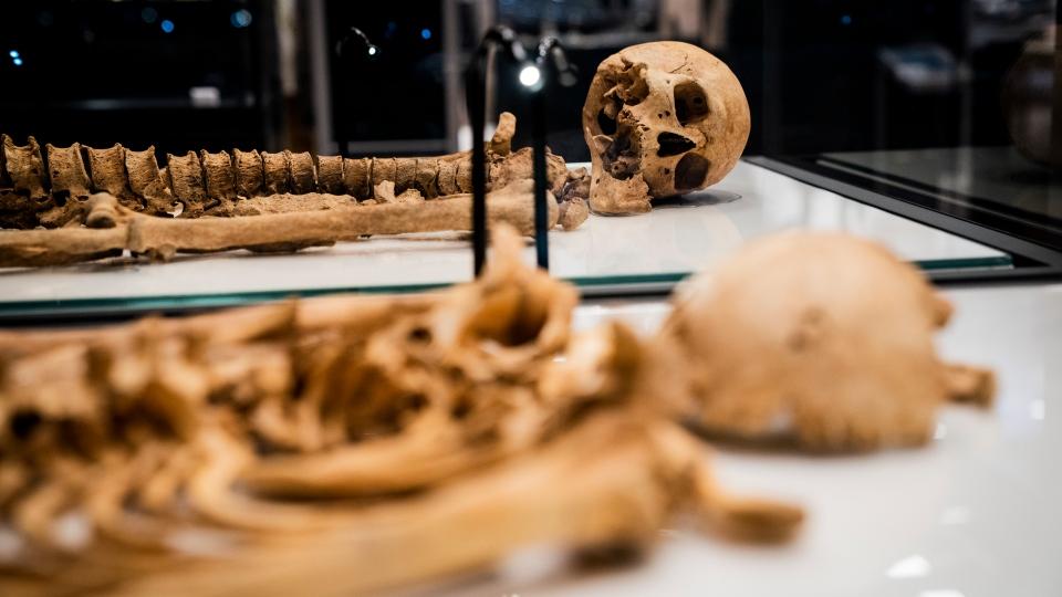 Cornes de cérémonie dans le musée national du danemark à copenhague, danemark. Skeletons Of Related Viking Era Men To Reunite For Exhibit Ctv News