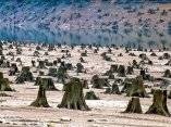 en-oregon-este-bosque-milenario-fueron-victimas-de-la-motosierra-para-una-nueva-presa