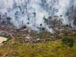 la-selva-en-llamas-cabras-que-pastan-aqui