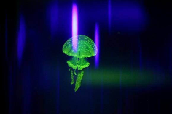 Medusas mágicas. Foto: EFE